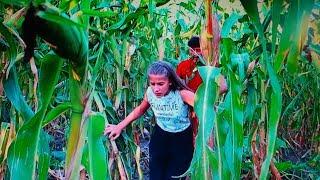 Miriam și Dani s-au RĂTACIT în lanul cu PORUMB