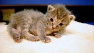 Fostering Kittens thumbnail
