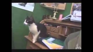 Говорящие коты!