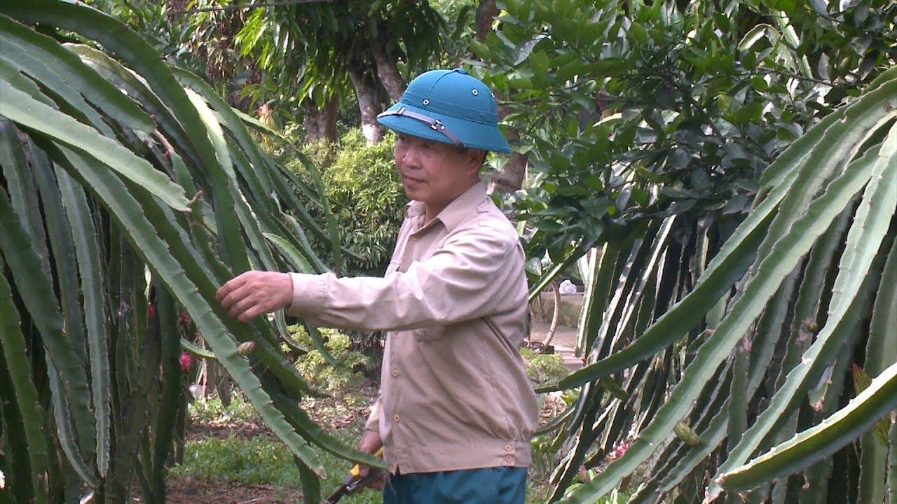 Bắc Quang tập trung tái cơ cấu ngành nông nghiệp