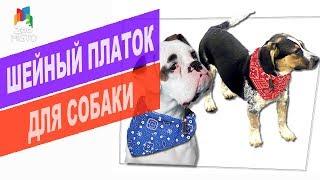 Шейный платок для собаки | Обзор шейного платка для собак