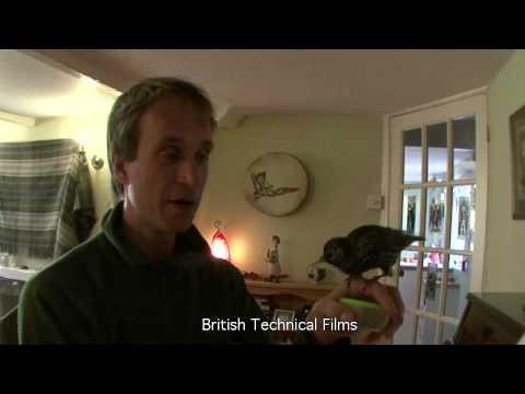 Lloyd BucK And Arnie The Talking Starling