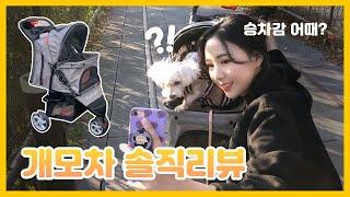 13살 노견 강아지 유모차 추천 + 산책 후기