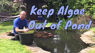 How to keep algae out of your garden pond | get rid of algae