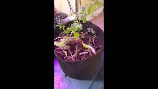 Mulch porn #3 plant bondage