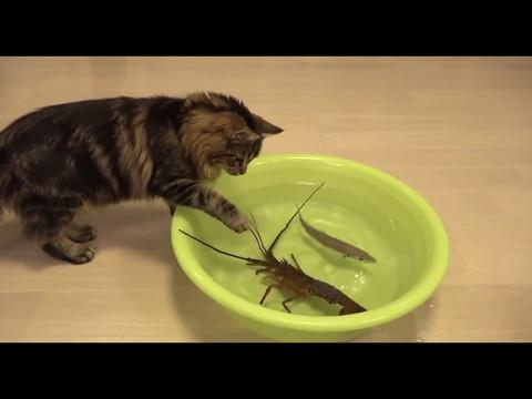 COOL CATS ¦ Приколы с котами    НА РЫБАЛКЕ! РЖАЧ!