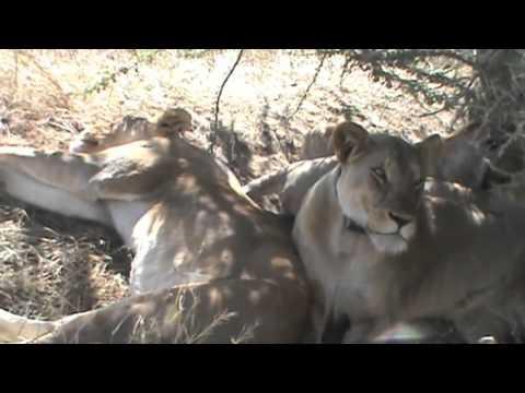 Betsy's Africa Trip!!!   Tanzania & Kenya 2012