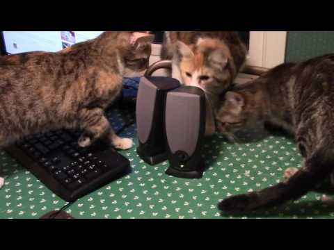 Cats React to Angry or Crying Cats and Kittens