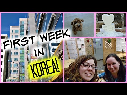 First Week in Korea- Health Exam, First Meal, & New Job