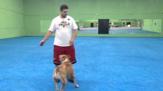 Miami Dog Boarding And Training - Bedtime Routine At The Canine Training Center