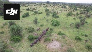 DJI Stories - The Elephants of Tanzania
