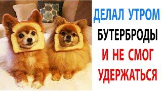 Мемы с собаками 2021 октябрь. Смешные животные. Мопсы подборка #shorts