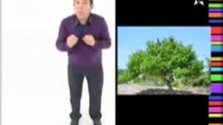 فاكهة الخروب