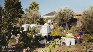 Urban beekeeping with the Flow Hive