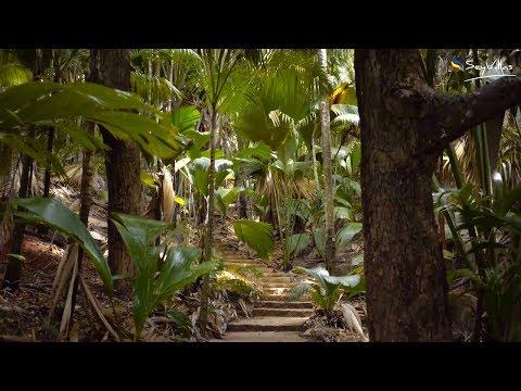 Vallée de Mai (Seychellen)