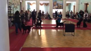 Тула. Выставка собак. 23.01.2016