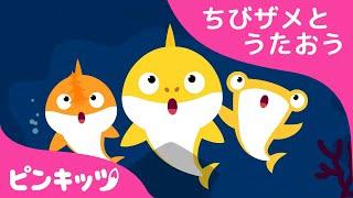 ちびザメの ぼうけん | サメのかぞく | ちびザメとうたおう | どうぶつのうた | ピンキッツ童謡