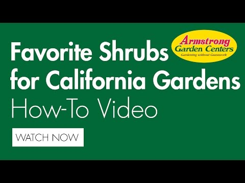 Favorite Shrubs for California Gardens - Armstrong Garden Centers