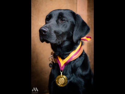 Sky - Labrador - 4 Weeks Residential Dog Training