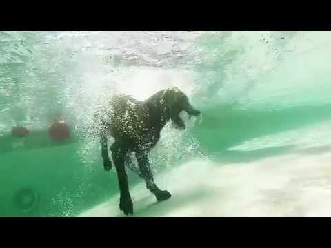 GoPro Underwater Dog Park Fun