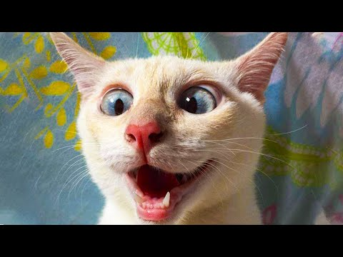The FUNNIEST ANIMALS compilation 2020 ?You will have TEARS IN YOUR EYES FROM LAUGHING ???