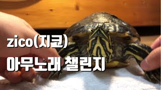 아무노래 챌린지(feat.거북거북스)