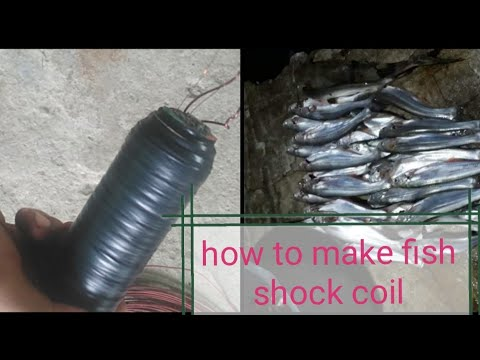 #How To Make Fish Shocker Coil
