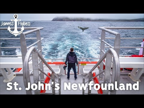 1 DAY IN St. JOHN'S NEWFOUNDLAND CANADA - Whale Watching & Signal Hill | Barbster360 Travel Vlog