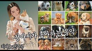 강아지가 좋아하는 음악 / 강아지 힐링음악 / 힐링되는 강아지 / 애견음악 / 분리불안,심리안정,수면유도