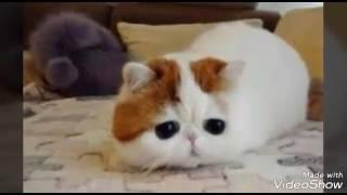 Милые котята картинки 😺😸😽