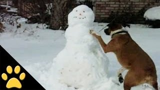 Dogs, Sleds And Snowmen
