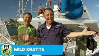 Wild Kratts: Fish in the Carribean Sea thumbnail