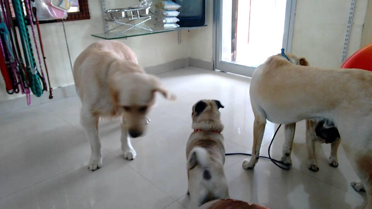 Dog Boarding In Chennai