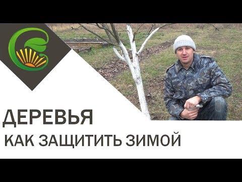 Как защитить деревья зимой