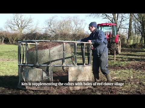 Ken Gill Organic BETTER beef farmer March update