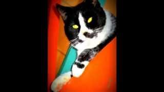 William AJR Korwenkoski - Reissumies ja kissa