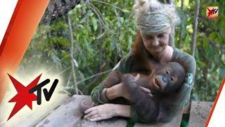 Orang Utan-Waldschule: Wie Waisen-Affen gerettet werden | stern TV