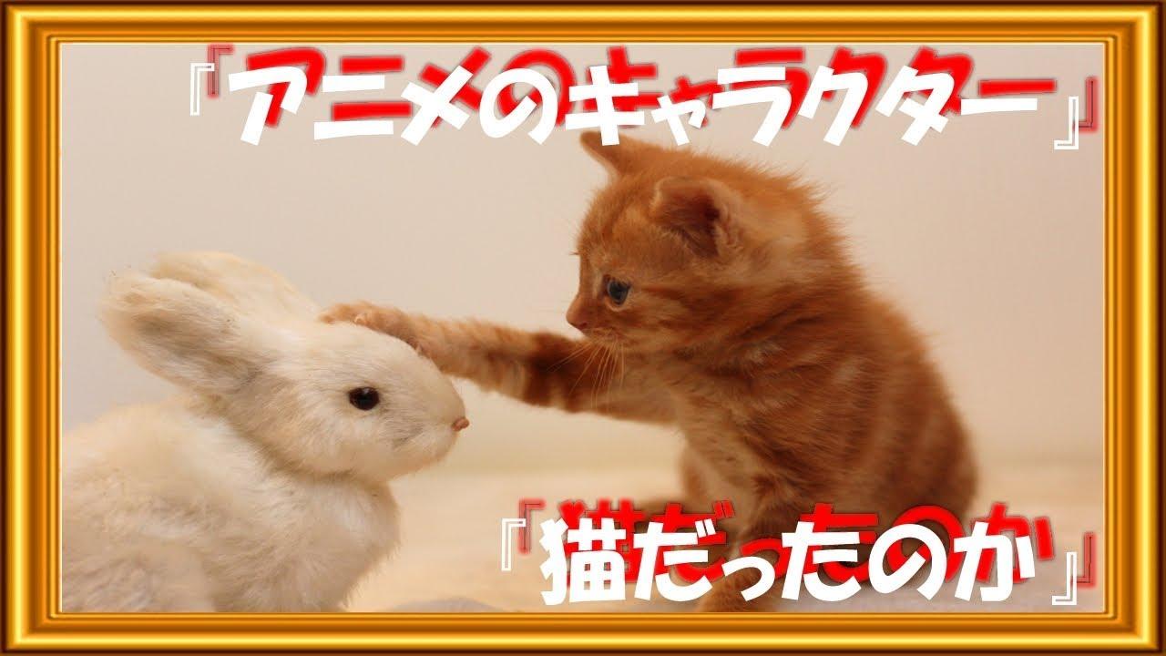 海外の反応アニメのキャラクターたちは猫だったのかアニメキャラ白人説