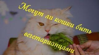 МОГУТ ЛИ КОШКИ БЫТЬ ВЕГЕТАРИАНЦАМИ CAN CATS BE VEGETARIAN