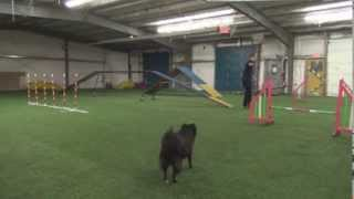 Pomeranian-mix Agility Training - November 2013