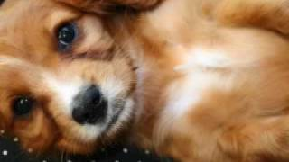 Positive puppy training and how to train a puppy tricks