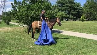 Buckwheat, great gaited ky mtn trail horse for sale. Buckskin