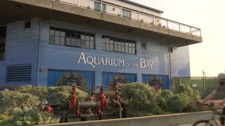 San Francisco's Aquarium o…