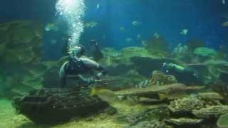 Дельфинарий в Санкт-Петербурге Акулы(Дельфинарий в Санкт-Петербурге., 2014-01-23T15:54:27.000Z)