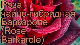 Роза чайно-гибридная Баркароле (Rose Barkarole) ???? обзор: как сажать, саженцы розы