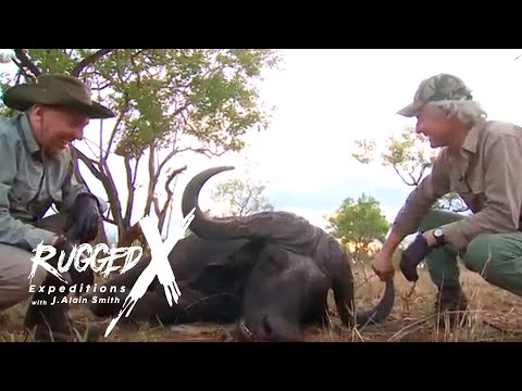 Nile Buffalo World Record?  With J. Alain Smith