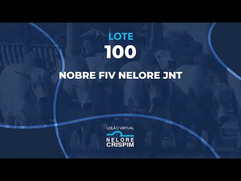 LOTE 100 JNT 21