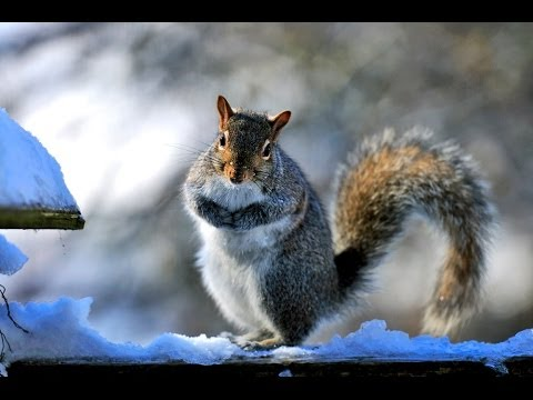 Necessity is the mother of Invention for Squirrels