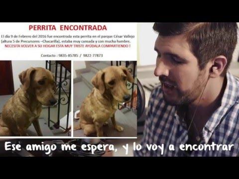 Canción Para Las Mascotas Perdidas - Martín Tremolada