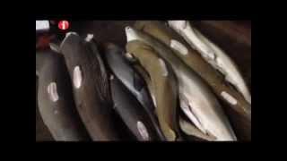 "I-Witness: ""Ang Tunay na Mabangis"", a documentary by Kara David (full episode)"